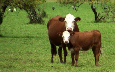 Vender carne en la era de la sostenibilidad y contarlo